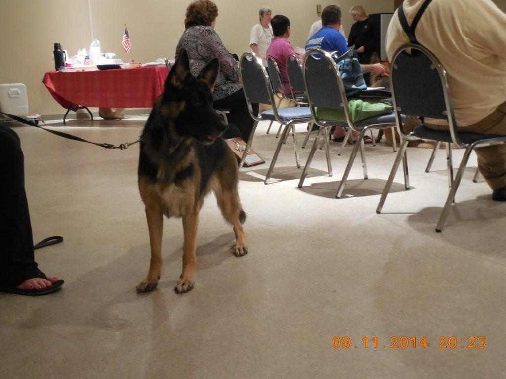 September 11 2014 Herding Metting photo 5