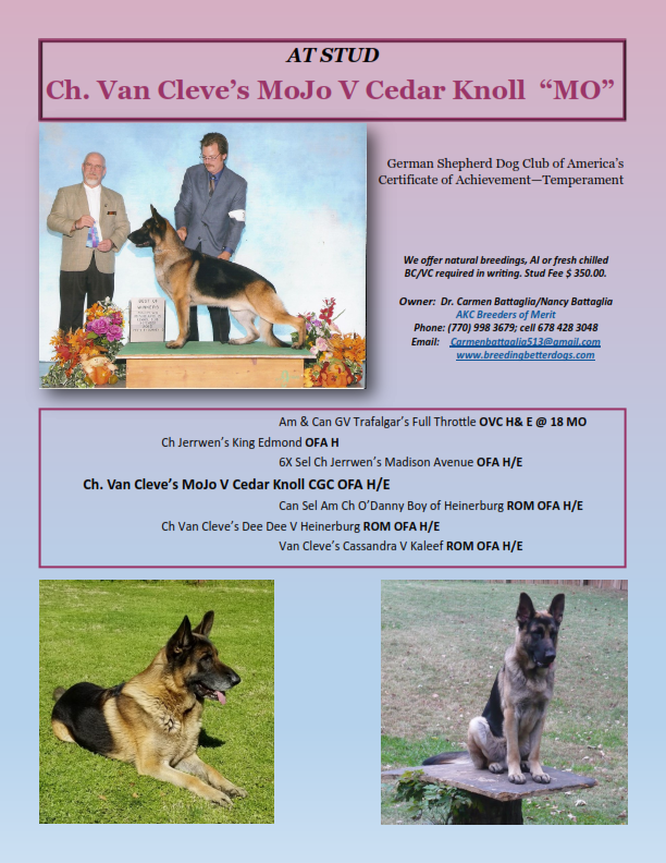 information on a german shepard dog called MoJo